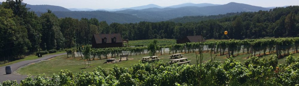 Wine Trails and Wanderlust